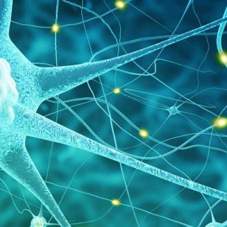 Видеокурс «Нервная система»